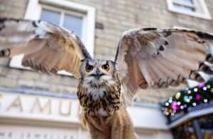 owl skipton flight 1 sm.jpg