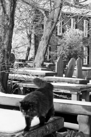 haworth church cat in cemetery sm.jpg