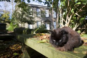 haworth graveyard cemetery cat sm.jpg