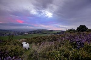 haworth moor sunrise august 22 2010 low res image.jpg