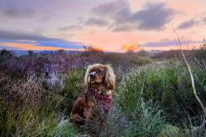 henry sunrise haworth march 2012 sm.jpg