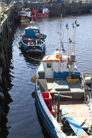 walkworth grange  fish quay 19 sm.jpg