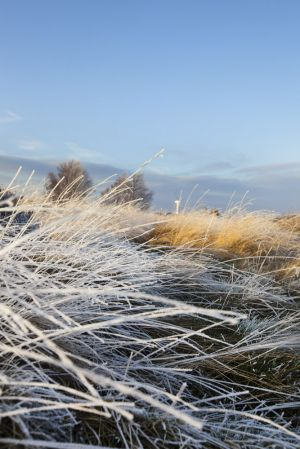 haworth frost jan 15 2012 sm.jpg