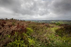 haworth moor june 2013 sm.jpg