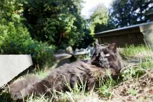 haworth cemetery cat graveyard september 2012 1 sm.jpg