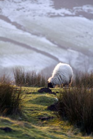 haworth moor jan 17 2012 sm.jpg