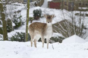 bambi haworth moor december 2 2010 sm.jpg