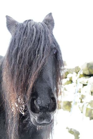 hippy horse haworth moor december 2 2010 sm.jpg