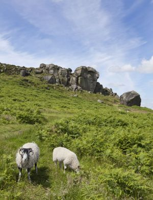 cow and calf rocks july 12 2012 sm.jpg