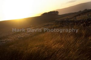 road to downham from barley 1.jpg