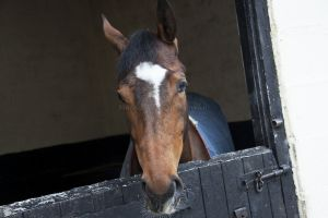 _middleham open day 19.jpg