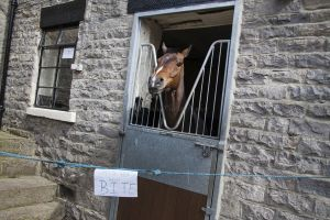 _middleham open day 32.jpg
