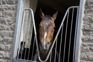 _middleham open day 33.jpg