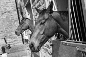 _middleham open day 34.jpg