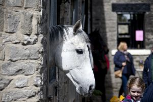 _middleham open day 37.jpg