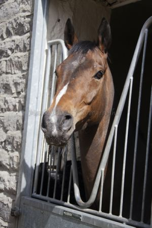 _middleham open day 38.jpg
