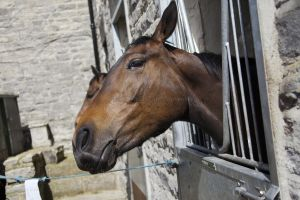 _middleham open day 40.jpg